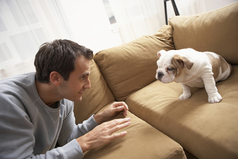 Puppy-proofing your apartment home