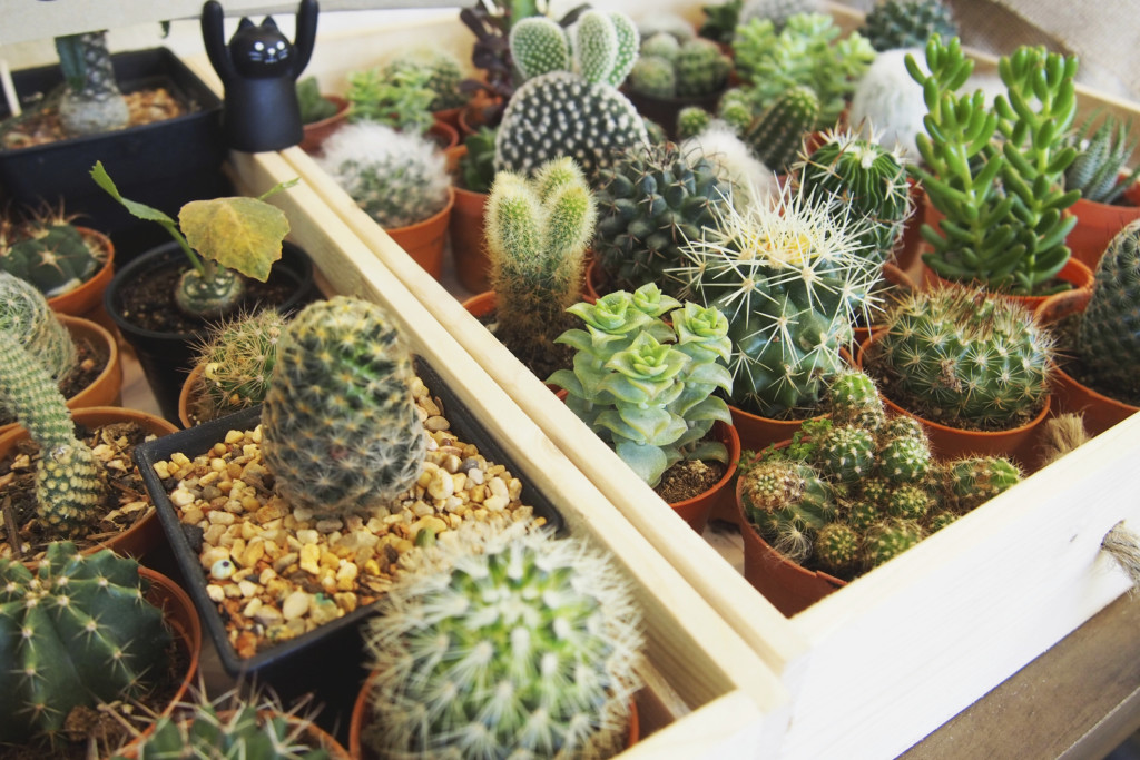 Tips for growing succulents indoors lincoln property company for How to keep succulents alive indoors