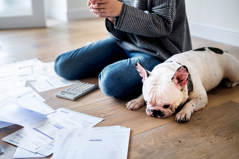 looking at financial documents with a dog