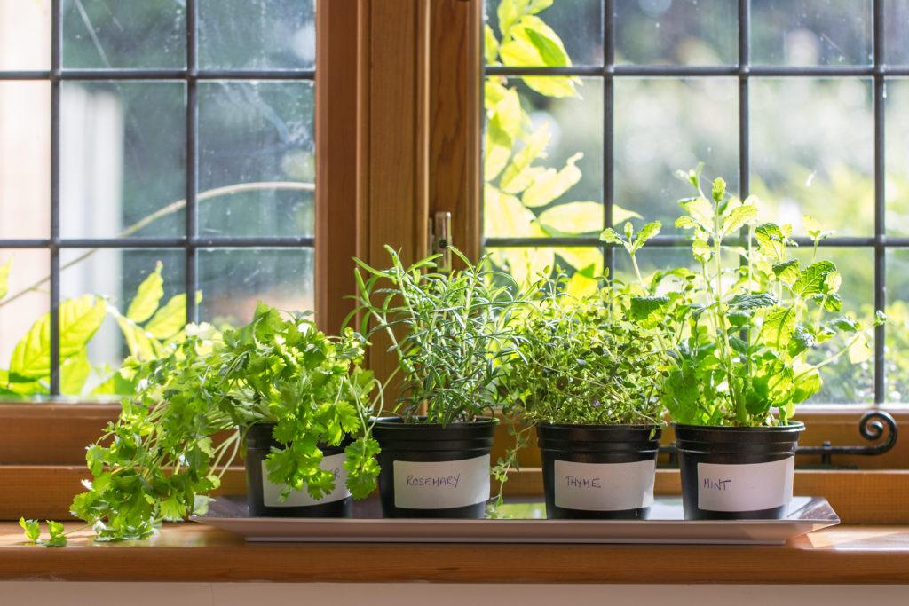 herbs in a kitchen