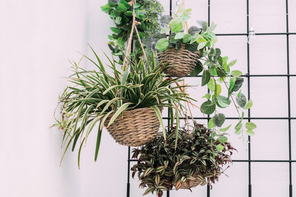 hanging plants in an apartment