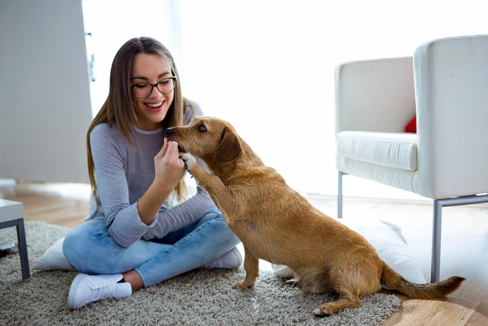 pet-friendly apartment