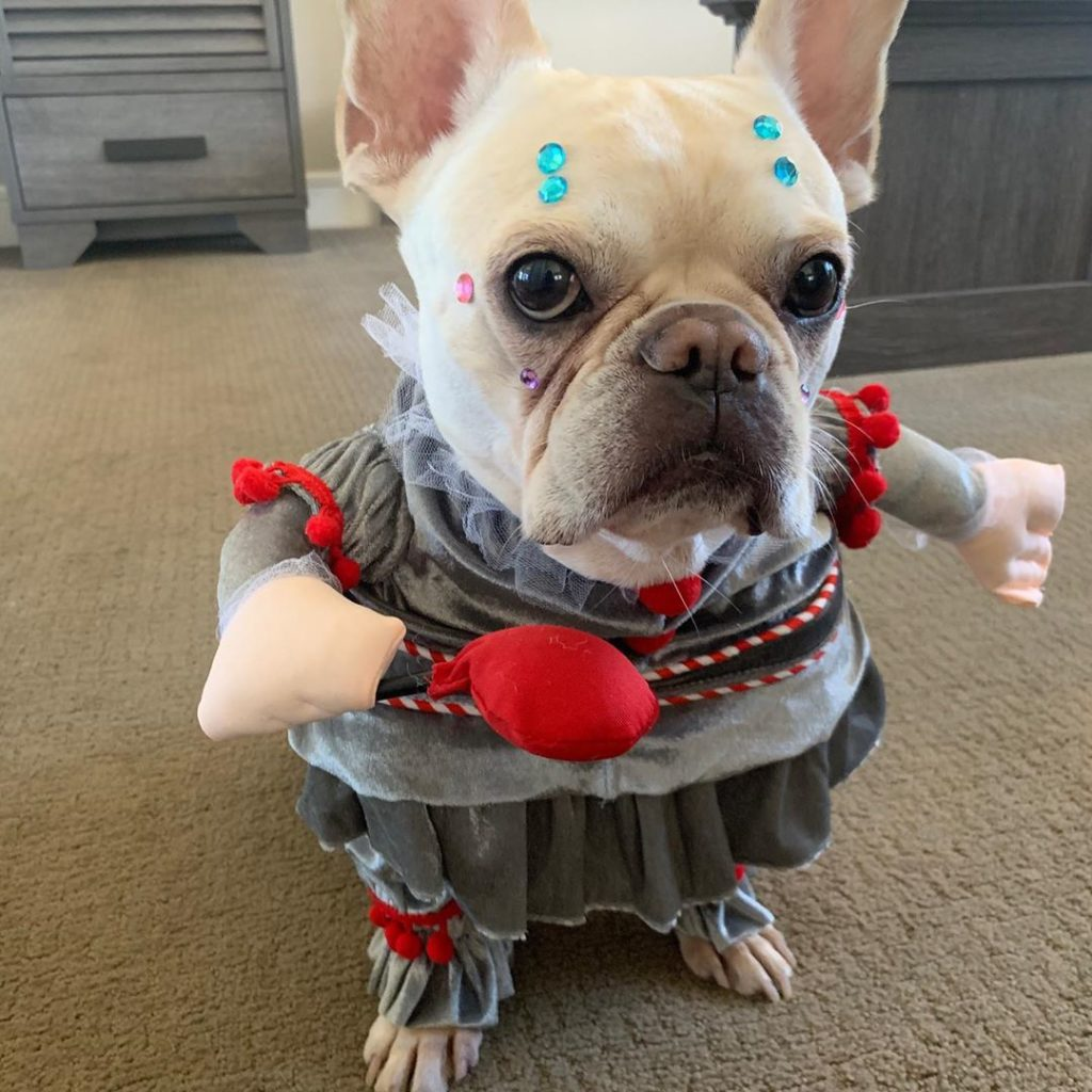A pup dressed up as Pennywise the clown