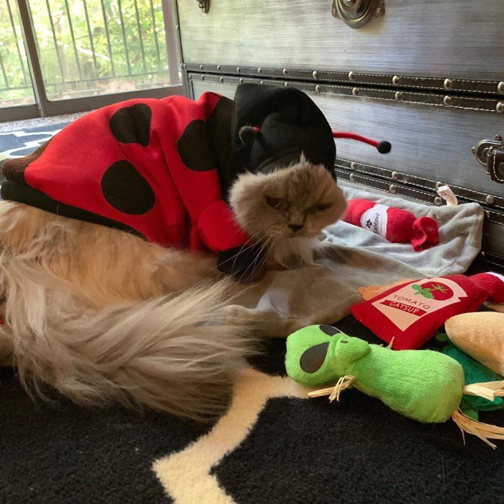 a cat dressed as a ladybug