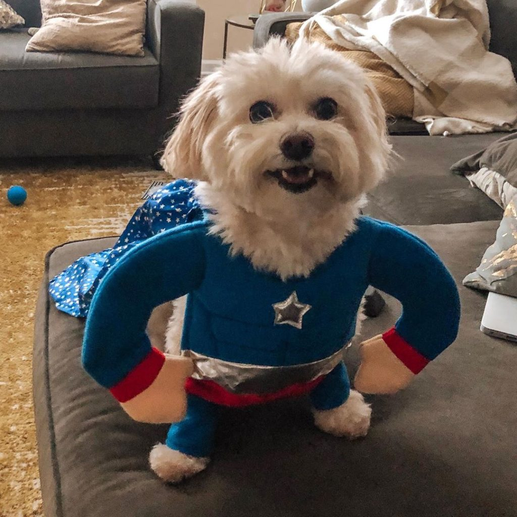 a pup dressed as a superhero