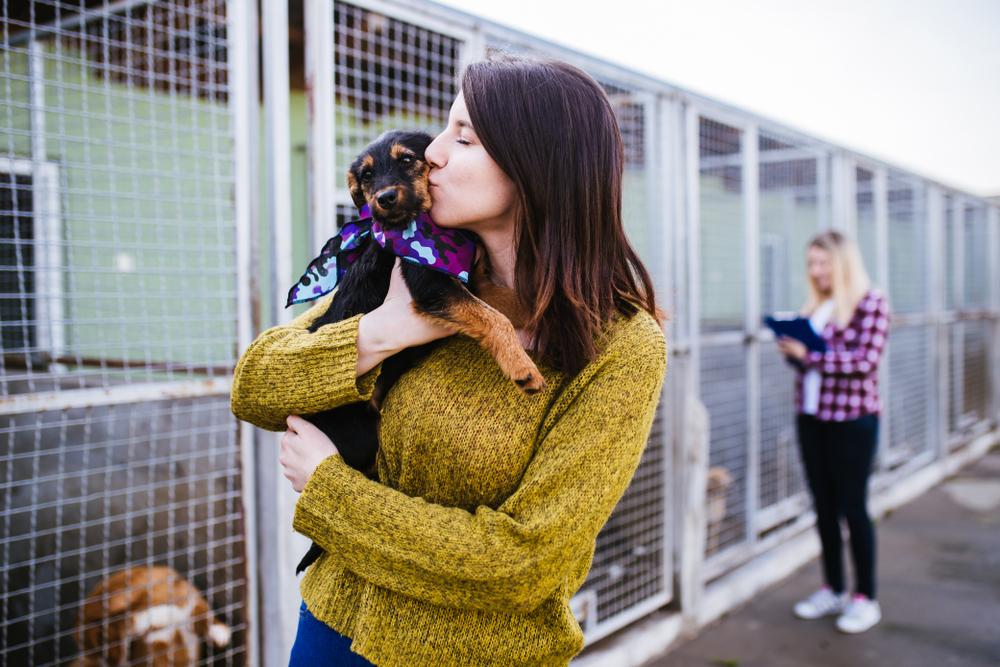 kissing a dog at a shelter