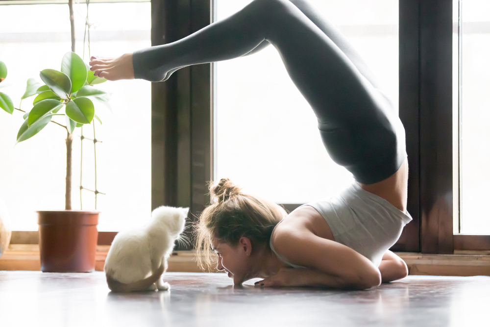 doing yoga at home with a cat