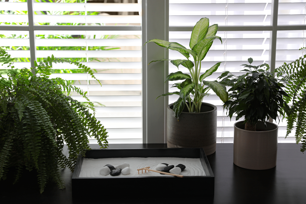 plants in a window