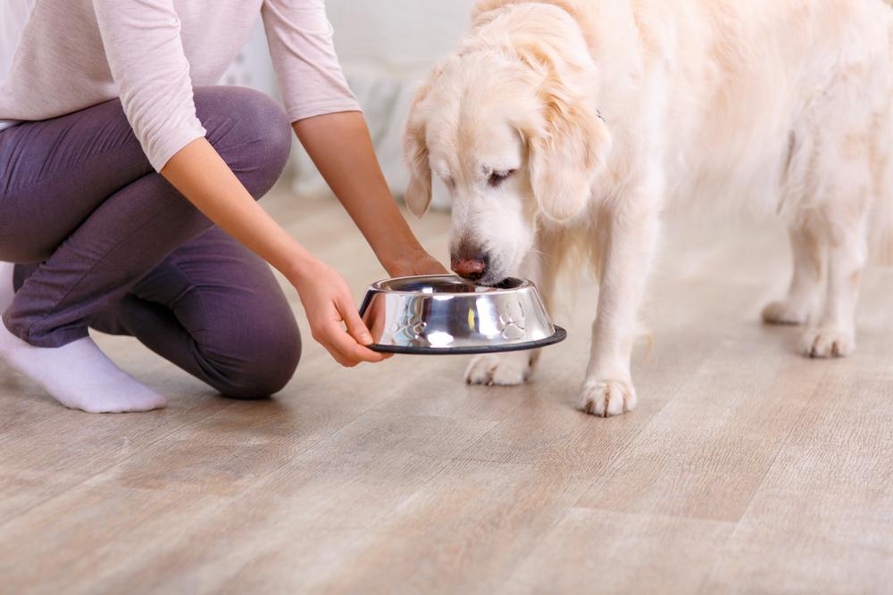 a dog eating food