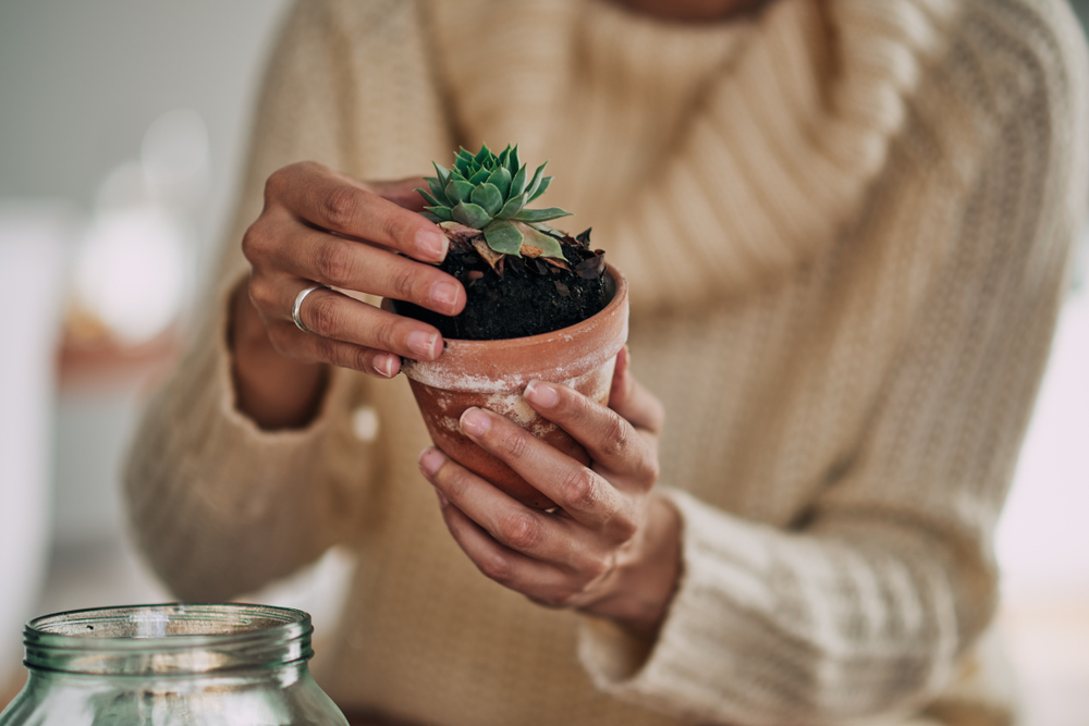 holding a plant