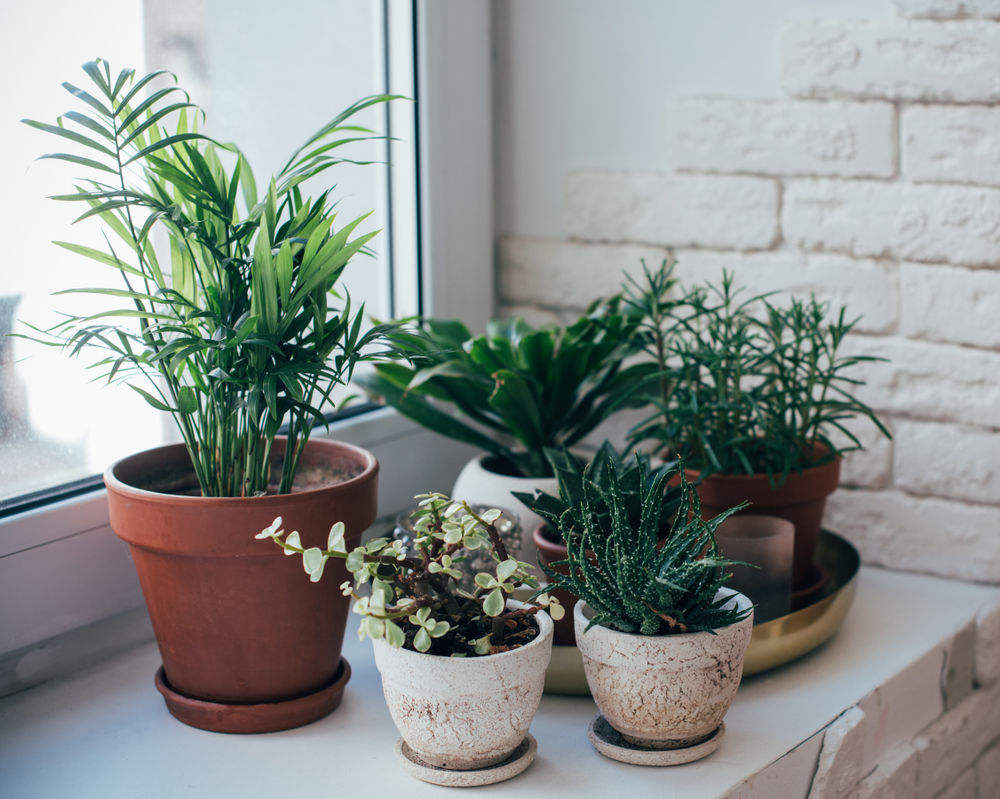 plants in an apartment