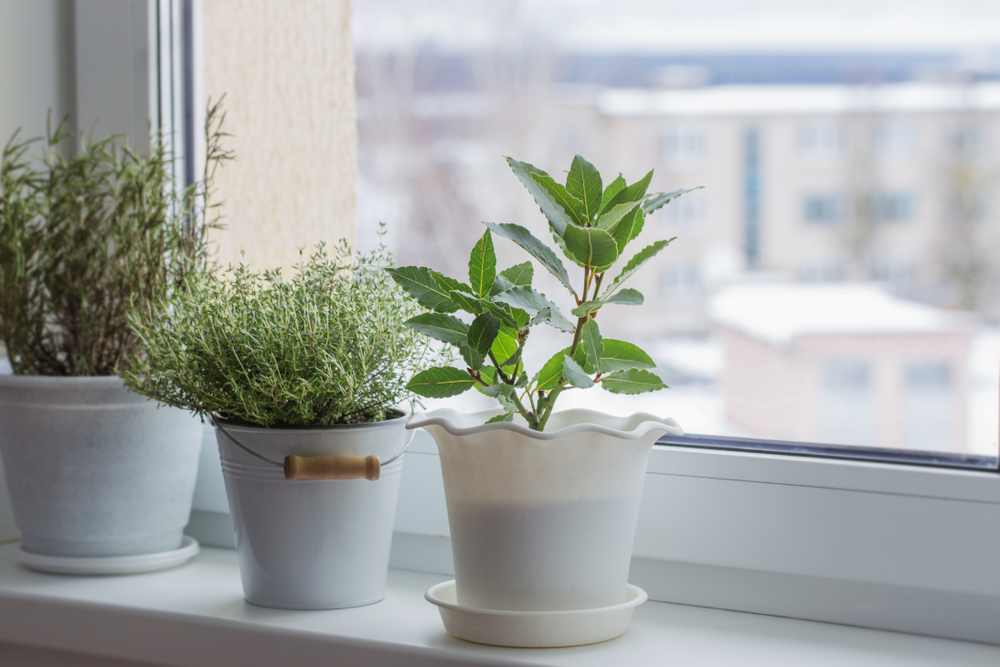 plants in the winter