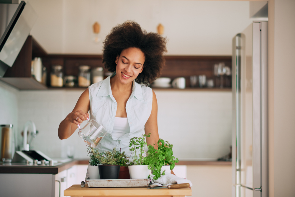 watering herbs in a kitchen | unique apartment plants