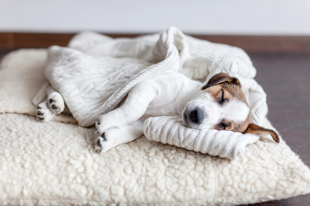 puppy sleeping on a bed | pet-friendly home decor tips