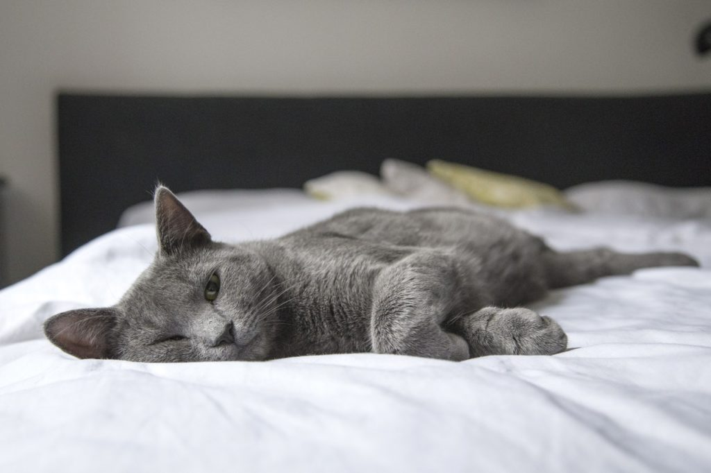 a cat sleeping | sustainable pet-friendly living