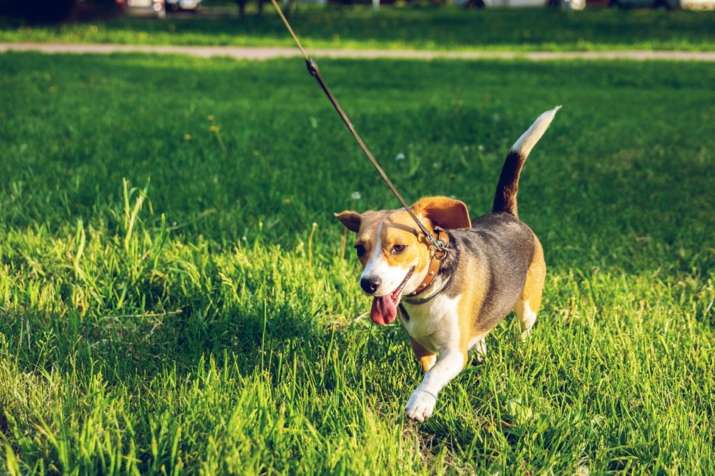 walking a dog | sustainable pet-friendly living